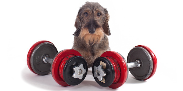 Would you swap your dumbbells for your DOG?
